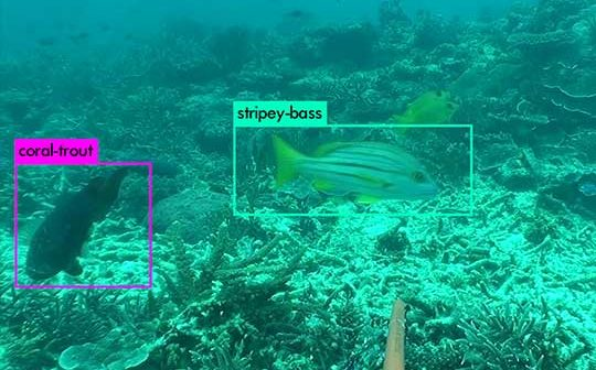 Automated Fish Counting System to Benefit Ecology