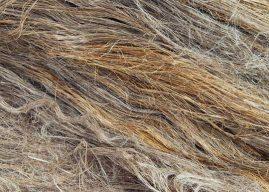 Flax Fibres Break the Glass Ceiling